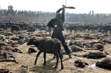 Hindu revellers ignore outcry over mass animal slaughter in Nepal