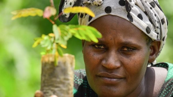 Ethiopia marks World Environment Day aiming to plant 5bn trees