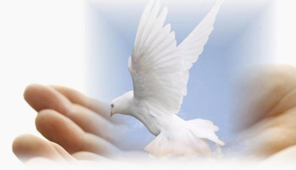 DAILY MEDITATION: ``I give you my peace. Not as the world gives peace do I give it to you``