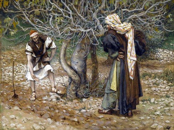 DAILY MEDITATION: ``He came looking for fruit on it, but found none``