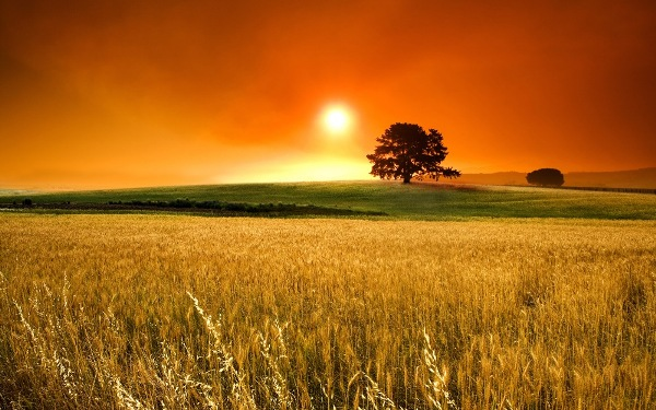 DAILY MEDITATION: ``Explain to us the parable of the weeds in the field``
