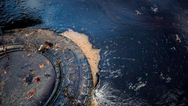 Mauritius: fear of major ecological crisis