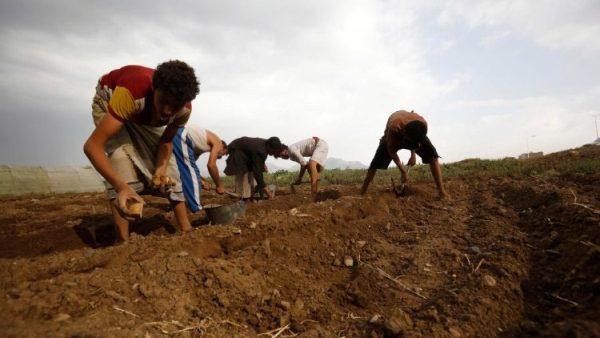 UN agencies warn of food shortages in Yemen