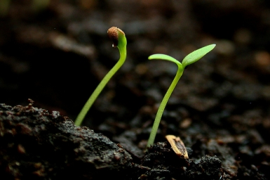 """""""... but if it dies, it produces much fruit"""" - Sunday 5th (B) of Lent"""