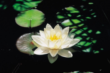 Buddhist Life: The Stages of Enlightenment